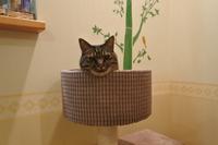 チビタの取材後 - 「両手のない猫」チビタと愉快な仲間たち