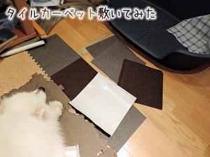 タイルなカーペット - サモエド クローカのお気楽日記