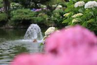水戸 保和苑 - フェイズと写真と時々・・・!