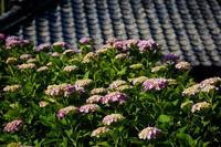 紫陽花と瓦屋根 - 花と風景 Photo blog