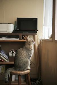 """看板猫 """"風"""" の店番日記・日々のお仕事 - 海花布土木"""