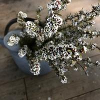 マヌカのドライフラワー - la petite couronne de fleur
