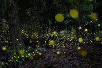 煌めきの森 - Qualia
