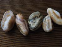 【海で拾った石】瑪瑙的石 - azukki的.