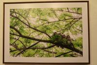 旭川の期待のホープ☆野生動物写真☆半田菜摘さんの写真展へ - へっぽこあるぴにすと☆
