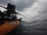 メーターロウニンアジ 2016年6月26日 - Pescador(釣り人)の日常