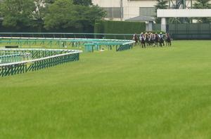 ディープインパクト産駒3頭出走のメイクデビュー阪神(新馬戦) - Turfに魅せられて・・・(写真紀行)