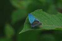 初夏の山にて - 蝶と蜻蛉の撮影日記