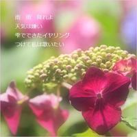 紫陽花 - m*photopoem