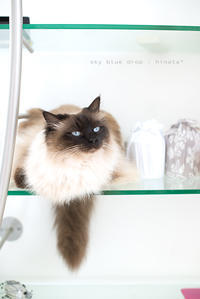 IKEAの家具で猫仕様2 - sky blue drop~14ニャンズトネコハウス//