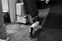 パンダ猫 - ホンテ島 日記