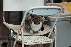 お嬢様のお仕事 - のらマニア~長崎ぶらぶら猫~