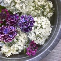 週始めの花仕事 - nico☆nicoな暮らし~絵付けと花とおやつ