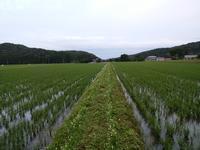 農作業 - 地産地消で沸かし湯の宿