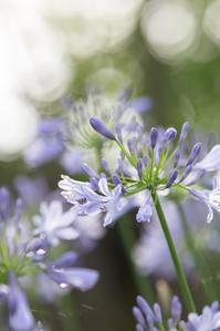 6月27日の庭の様子 - おぐさん便り・°°☆