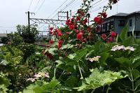 さようなら。英国風ティーハウス「ガレージブルーベル」@鎌倉 - PASSAGE