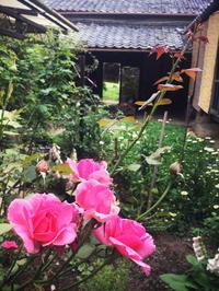 梅雨空の中庭。 - Bon Copain!