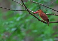 遠征 9 - 今日も鳥撮り