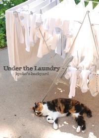 洗濯物の下で - Kyoko's Backyard ~アメリカで田舎暮らし~