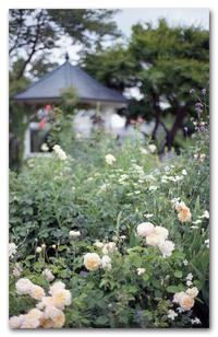 #2221 イングリッシュローズの庭 - at the port