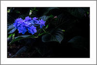 熊本梅雨・初夏の花々2017(2) - 前田画楽堂本舗