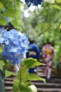 鎌倉散歩*明月院の紫陽花 - ラクトフラム