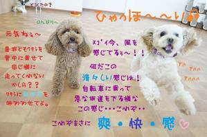 スカッとした爽快感を求めて(*´▽`*) - 犬の幼稚園 chouchou ~シュシュ~