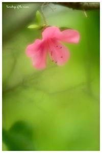 *皐月花* - 心写心癒  ~心の鏡~