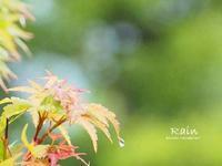 休息 - PHOTO俳句ブログ
