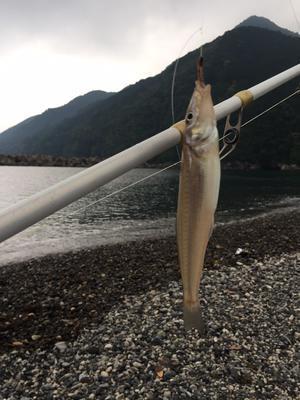 紀北町の旅は楽しい釣行となりました。 - ダディの観察日記