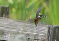 活発な若鳥 - 写写衛門