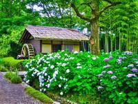 2017.6.27梅雨の花(府中市郷土の森) - ダイヤモンド△△追っかけ記録