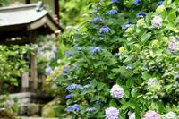 参道に咲く花 - 暮らしの中で