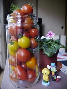 2017年6月27日ミニトマトの収穫‥‥‥ - じゃこてんのつぶやき