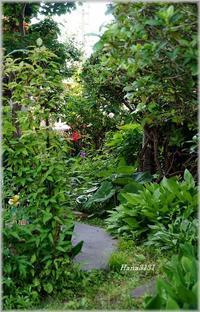 6月の庭で。。。 - あれこれ逍遥日記 Vol.2