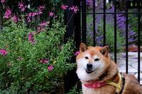 初夏の花園 - 写心食堂