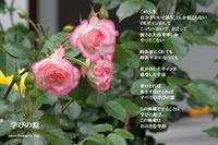 学びの源 - 花の咲み、花のうた、きらめく地上 ―― photo&poem gallery kannon花音