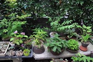 ほっと一息 - リリ子の一坪ガーデン