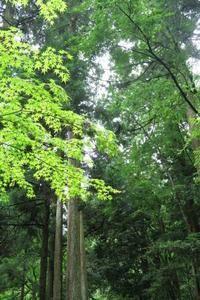 木の根道   ~フォトハイキング - すずめtoめばるtoナマケモノ