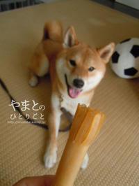 柴友おすすめの歯磨きガム - yamatoのひとりごと