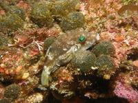 2012.02 伊豆山 The 2nd Dive - ランゲルハンス島の海