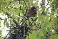 キアシドクガが舞う季節 - 野鳥写真日記 自分用アーカイブズ