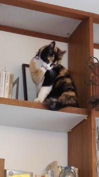 三毛猫ひかちゃん -56- - 殿様の試写室