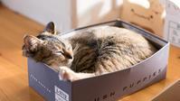 靴の箱がぴったり - 猫と夕焼け