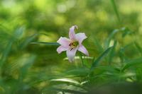 旬の花・・・! - さすらいの写遊人