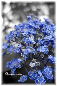 パートカラー BLUE - 日々楽しく ♪mon bonheur
