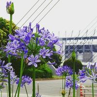 紫の花 - NATURALLY