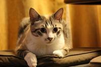 いい顔で - ぎんネコ☆はうす