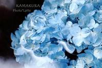 紫陽花物語#1 - Photo*Latte