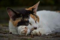 眠る野良猫 - Mark.M.Watanabeの熊本撮影紀行
